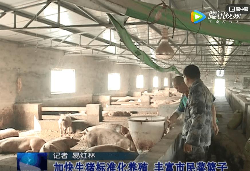 蚌埠市:加快生猪标准化养殖 丰富市民菜篮子