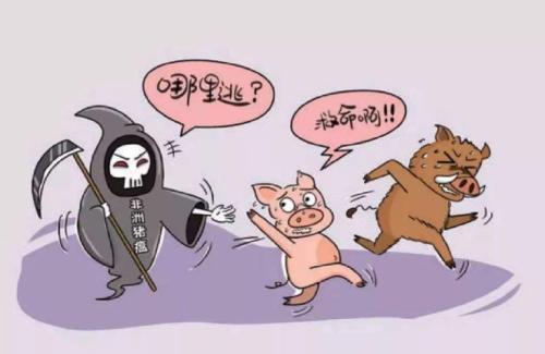 江苏沭阳在查获的外省违规调入生猪中排查出非洲猪瘟疫情