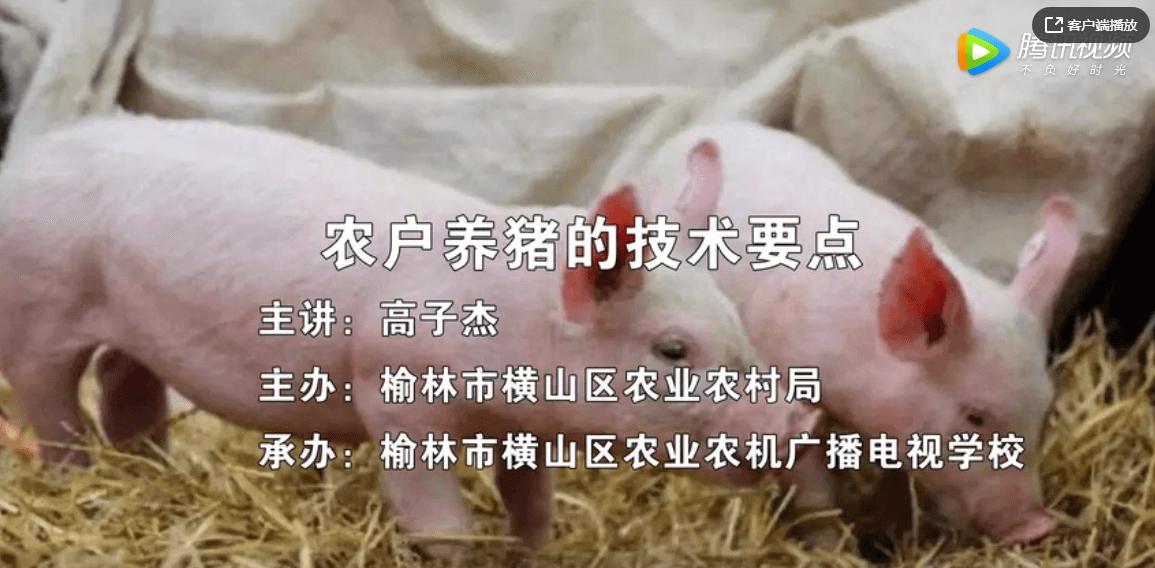 榆林市横山区农业农村局:农户养猪的技术要点