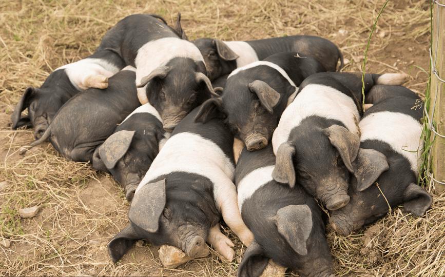 4月20日全国各省市15公斤仔猪价格报价表,大部分地区仔猪均价大于1500元/头!
