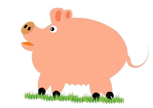 猪咳喘用什么药最好?老兽医教你治疗猪咳喘不反弹