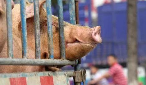 生猪存栏恢复缓慢,产业景气周期将显著拉长,继续重点推荐养殖产业链!