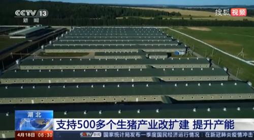 """湖北新政策:""""真金白银""""支持500多个生猪产业改扩建 新增生猪产能超150万头"""