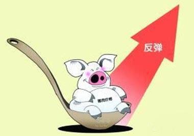 消费端逐渐回暖 山东猪价本月下旬或迎来反弹