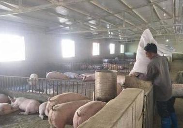 岑溪市三堡镇加快生猪养殖复产做大做强产业