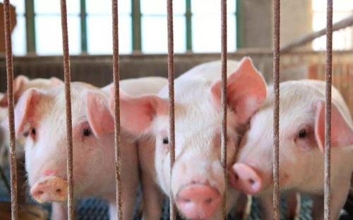 江西省生猪存栏达到1110万头,产能连续7个月实现增长