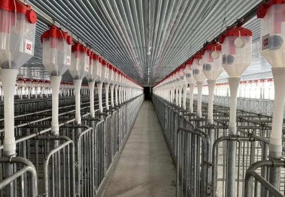 """上海:这里的猪将住上""""星级酒店"""",明年将出栏2.5万头生猪"""