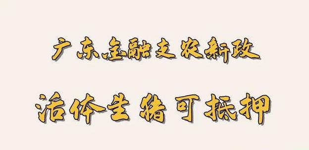 广东金融支农:生猪活体抵押,最快五小时放贷