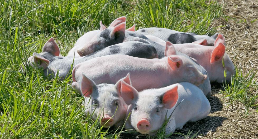4月22日全国生猪价格外三元报价表,上涨省市增多,主要集中在北方地区!