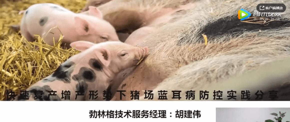 胡建伟——快速复产增产形势下,猪场蓝耳病防控实践分享