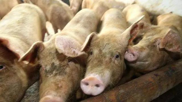 4月底了还不涨,养猪户很难受,5月猪价会涨吗?