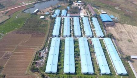 大量万头规模养猪场涌现,散户养猪该如何应对?