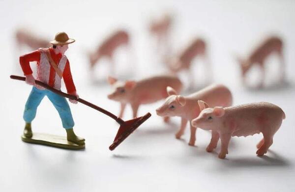 中国猪王之争生变:温氏股份肉猪销量下降,首季出栏量被牧原反超