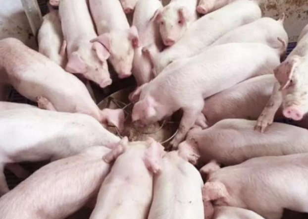 仔猪成活率低,从仔猪到保育猪要注意哪些方面,才能尽可能避免损失?