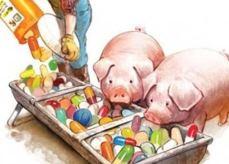 饲料禁抗后,养户一定要选择生物发酵饲料吗?
