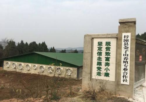 四川梓潼县:全力打造50万头年产值30亿生猪全产业链