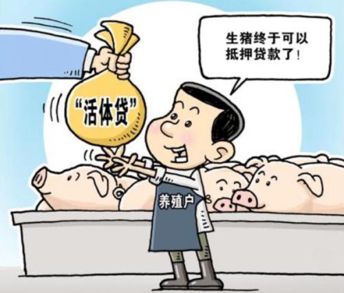 """为16家企业授信超1亿元, 肇庆生猪活体抵押贷款经验""""增量扩面"""""""