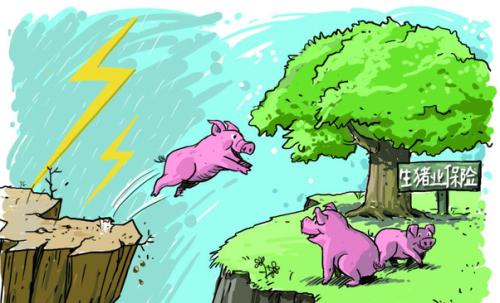 湖北农发行分行投放首笔活体生猪抵押贷款3000万,支持企业扩大生猪产能