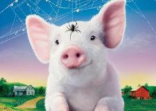 5月3日全国各省市15公斤仔猪价格报价表,广东地区的仔猪价格持续领先全国!