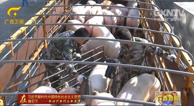 广西:生猪复产提速 一季度生猪存栏环比增长4.4%