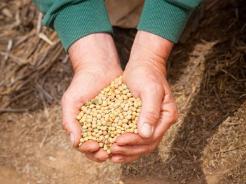 5月8日全国豆粕价格行情表,豆粕价格有所回落,北方较为明显!