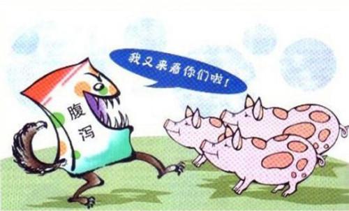 """猪流行性腹泻是检验猪场生物安全是否有漏洞的""""吹哨人"""""""