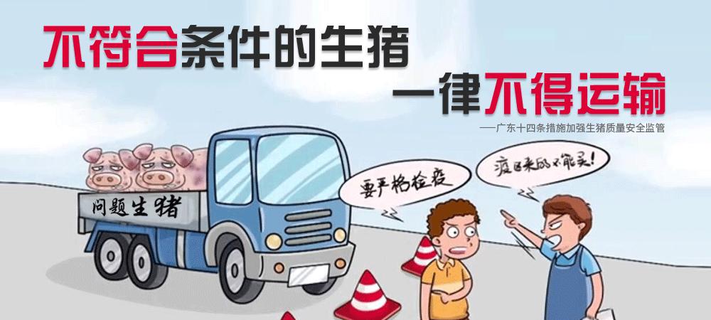 不符合条件的生猪一律不得运输!广东十四条措施加强生猪质量安全监管