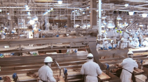 美国肉类加工厂切割流水线