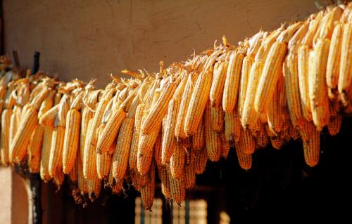 5月11日全国玉米价格行情表,玉米价格微幅上涨,呈现持续回暖
