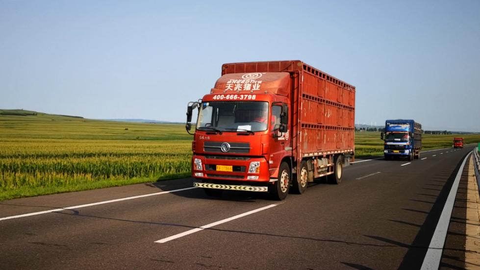 非洲猪瘟情况下:苗猪长途运输注意事项