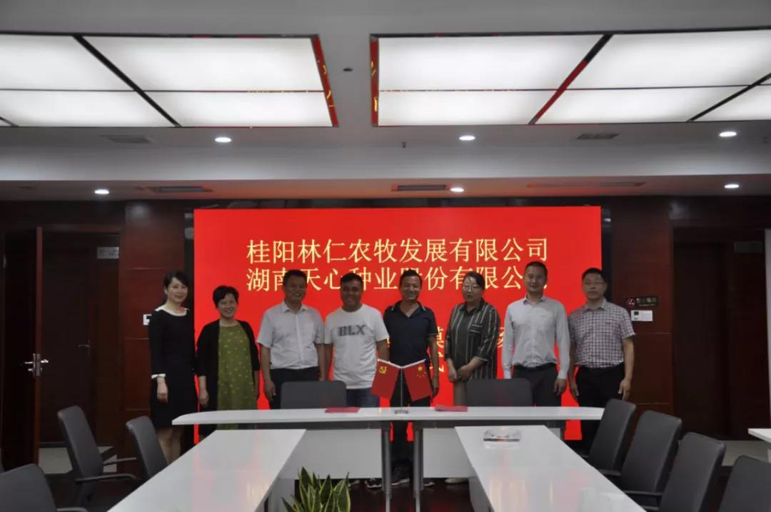 天心种业和桂阳林仁农牧发展有限公司签订3600头母猪合作建设项目