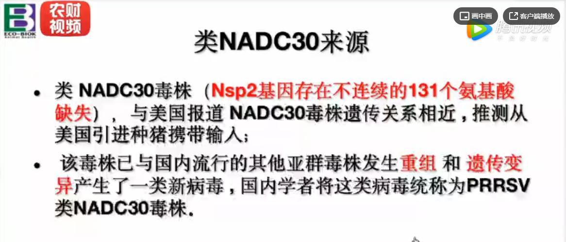 类NADC30在蓝耳病中的主要危害和防控措施