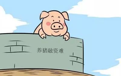 江西新余市:出台优惠政策解决生猪生产企业融资难题