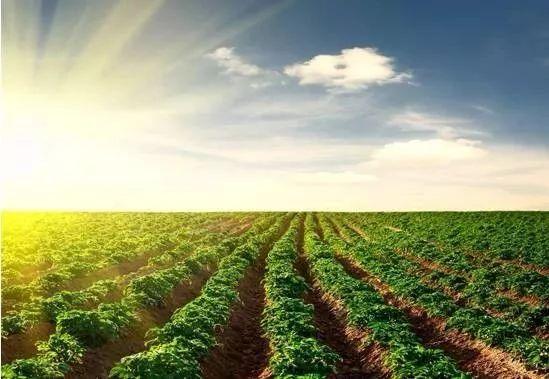大北农:控股及参股公司2020年4月份销售生猪10.43万头 同比增长90.3%