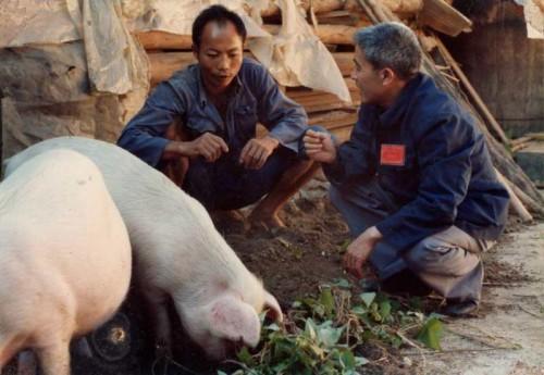 """推动生猪健康养殖转型突破,""""零残留药食同源""""新技术获机遇"""
