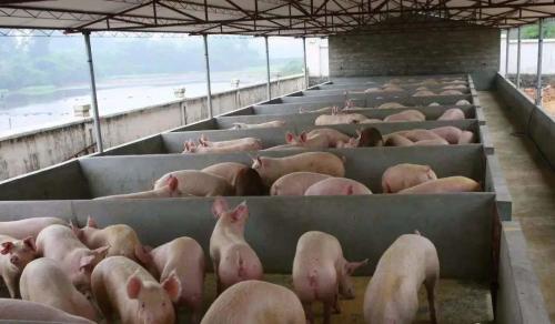 买未检疫仔猪致猪场477头猪患病死亡,买家不付款被告上法庭