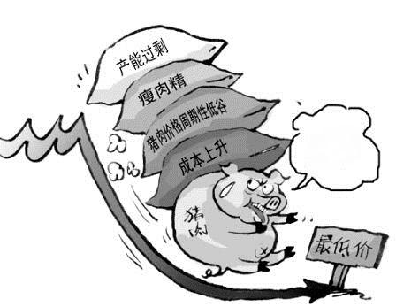 生猪养殖业会过剩?专家:前提是养的猪都能顺利活下来