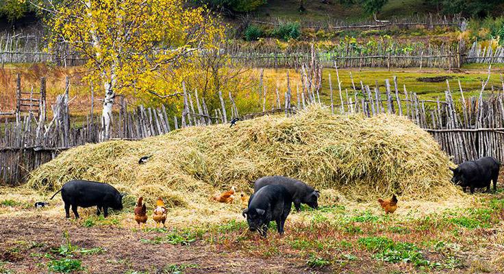 国家林业和草原局:生猪养殖使用宜林地不改变林地用途