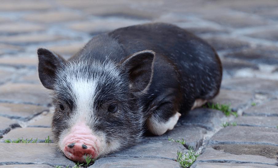 5月18日生猪价格走势,22省市反弹上涨,猪价拐点已至?