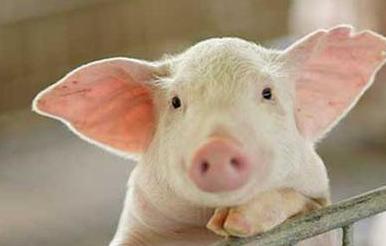 5月20日猪价走势,全国生猪均价微涨,西北西南两地全面上涨!