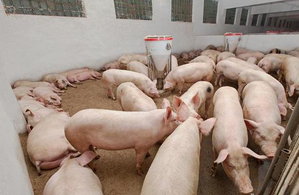 """江苏:徐州""""菜蓝子""""又添新保障 沛县签约百万头生猪养殖加工项目"""
