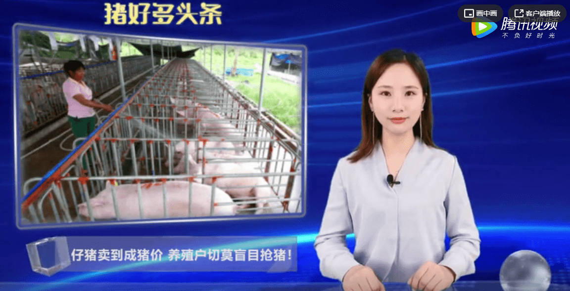 仔猪卖到成猪价,养殖户切莫盲目抢猪,需警惕养殖成本过高!