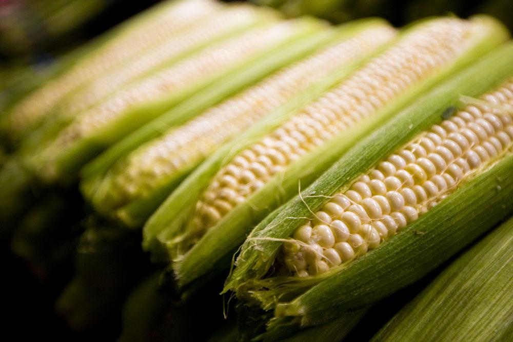 5月22日全国玉米价格行情表,受临储拍卖影响,继续微幅上涨!
