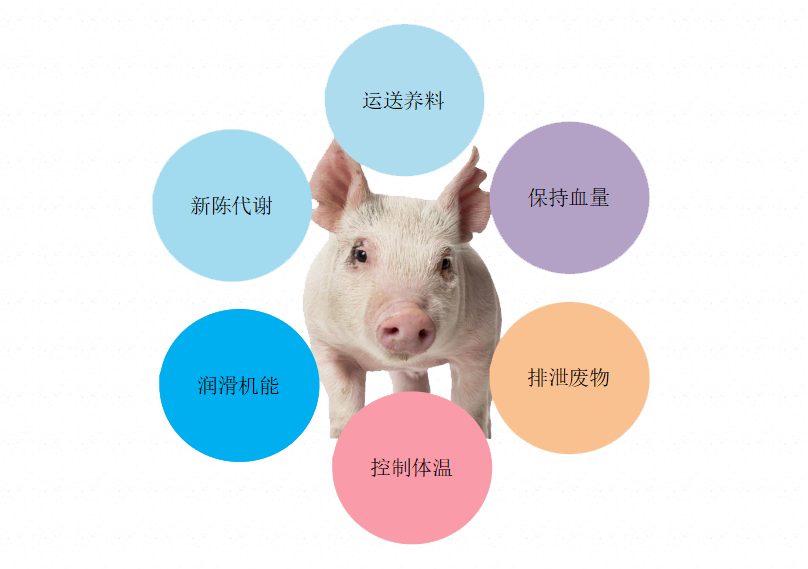 雨季非瘟高发,猪场饮水安全的潜在风险有哪些?