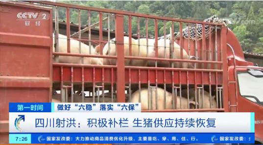 四川射洪生猪存栏连续5个月增长 生猪产业持续恢复