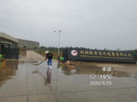 第一批4000头母猪顺利进场 宣告湖北傲农石场基地正式投产