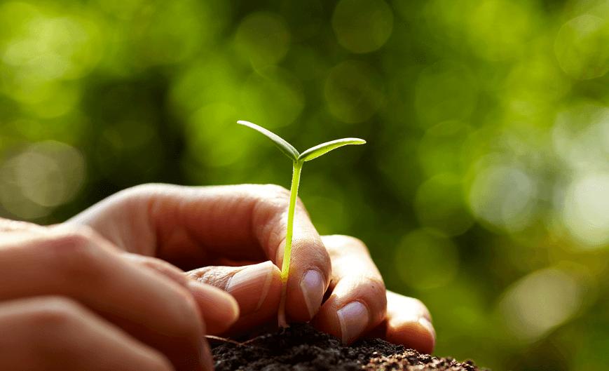 农村农业部下达5000万公斤国家救灾备荒种子储备任务