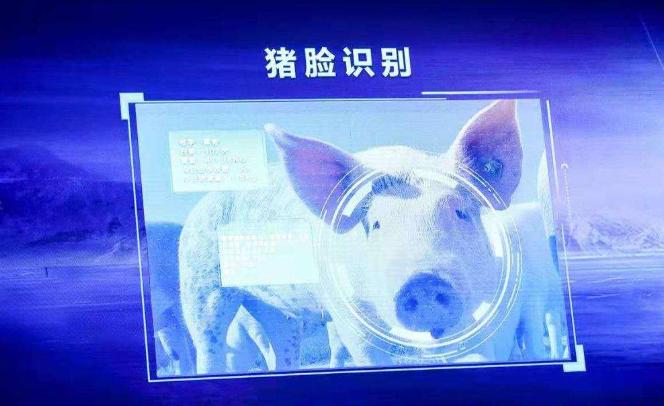 养殖理念——智能化赋能生猪养殖转型升级