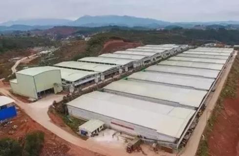 安徽:一批生猪建设项目密集开工,生猪产业产能正加速恢复