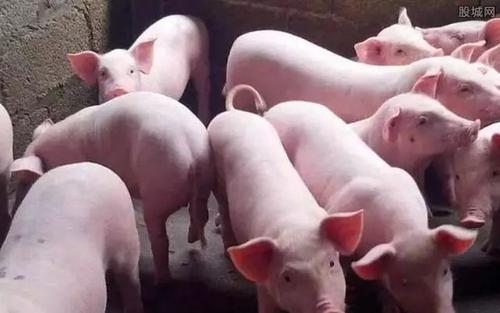 粪肠球菌——可提高饲料转化率和营养吸收的催肥产品
